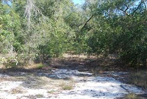 Sandhill Preserve