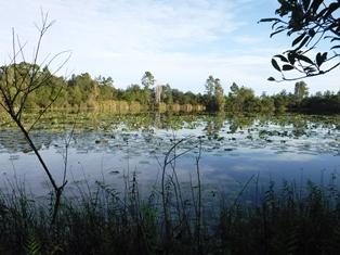 Hidden Pond Preserve