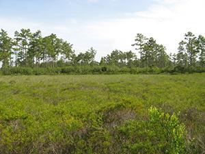 Savage Christmas Creek Preserve