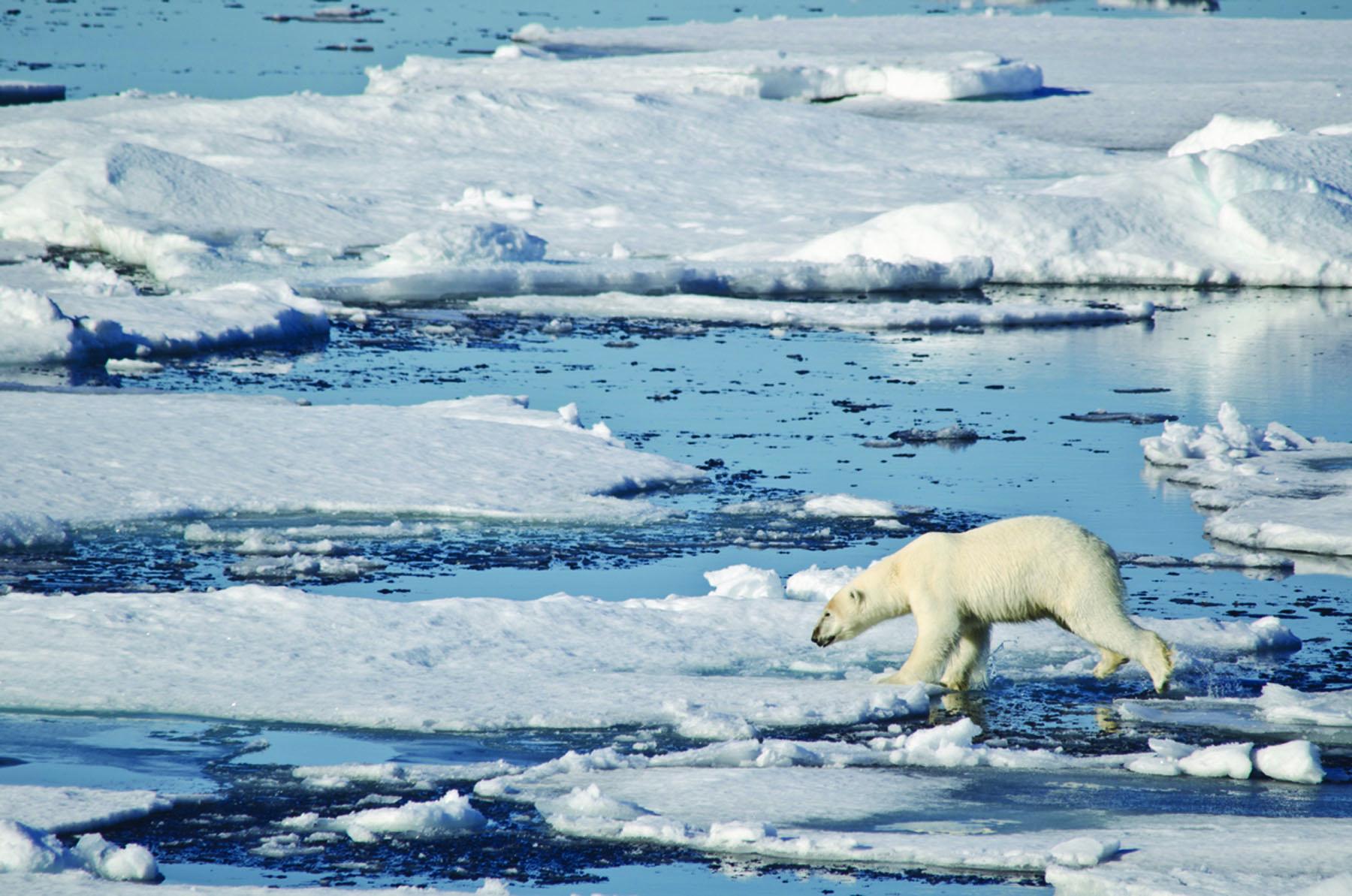 Orange polar bear